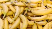 vista previa del artículo Plátano de Canarias