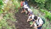 vista previa del artículo Creación de huertos escolares en Lanzarote