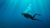 vista previa del artículo De buceo en las aguas de Gran Canaria