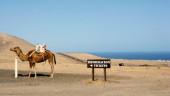 vista previa del artículo Descubriendo las Islas Canarias