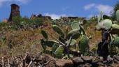 vista previa del artículo Descubriendo El Rosario en Tenerife
