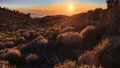 vista previa del artículo Lo que se puede ver en las Islas Canarias