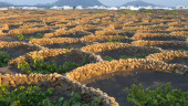 vista previa del artículo Los invasores de las Islas Canarias