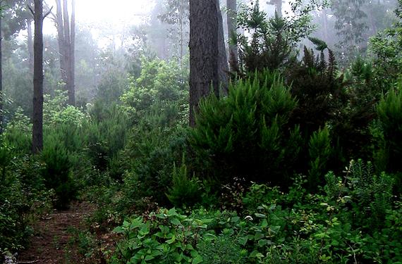 Bosque en La Matanza