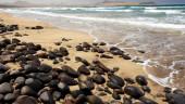 vista previa del artículo Tenerife, la isla de los contrastes