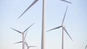 vista previa del artículo Ecología y medioambiente en Gran Canaria