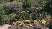 vista previa del artículo El Jardín Botánico Viera y Clavijo en Gran Canaria