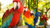 vista previa del artículo Guinate Tropical Park en Lanzarote