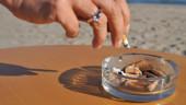 vista previa del artículo Un verano ecológico en la playa