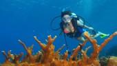 vista previa del artículo Buceo y snorkeling en las Islas Canarias